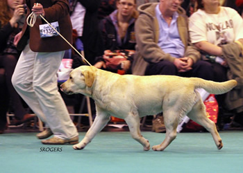 2013 Crufts Res CC winner